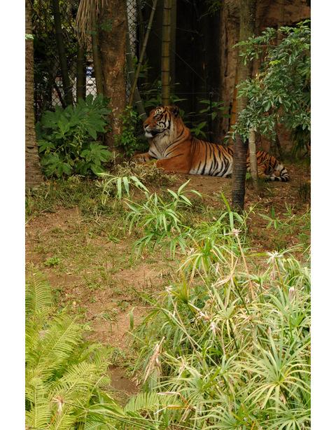 2009122_zoo3