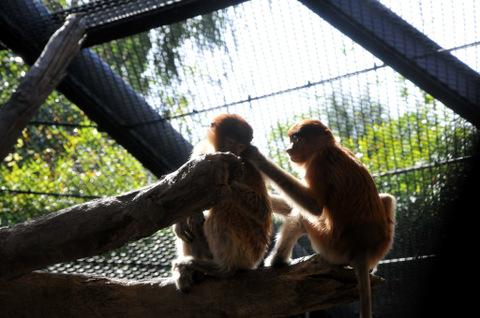 2009122_zoo4
