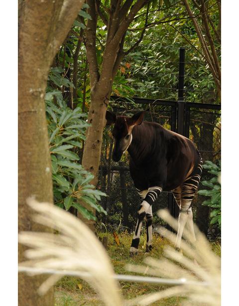 2009122_zoo6