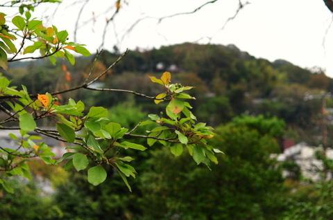 2009125_tokeiji2