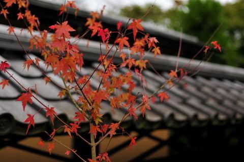 2009125_tokeiji8
