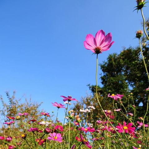 20091107_flower1