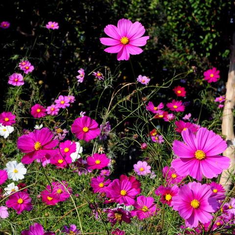 20091107_flower2