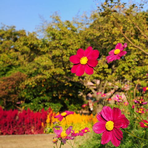 20091107_flower4