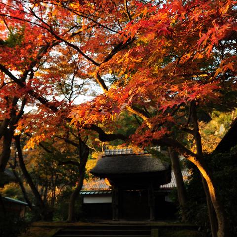 20091121_engakuji1