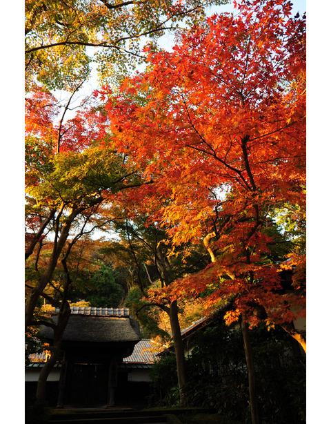 20091121_engakuji3