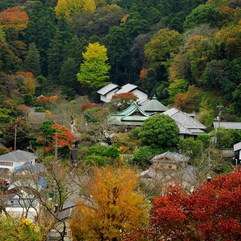 20091122_engakuji1