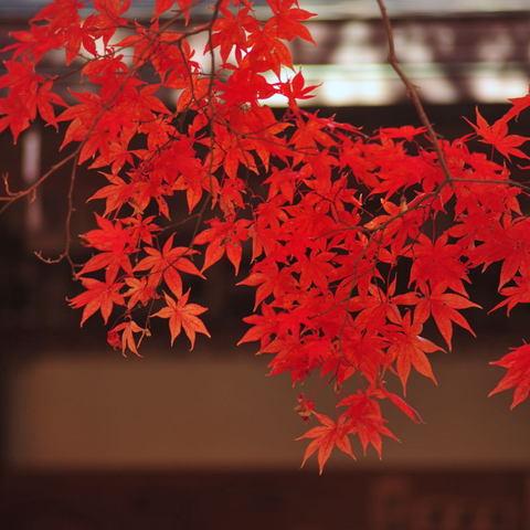 20091128_kakuonji1