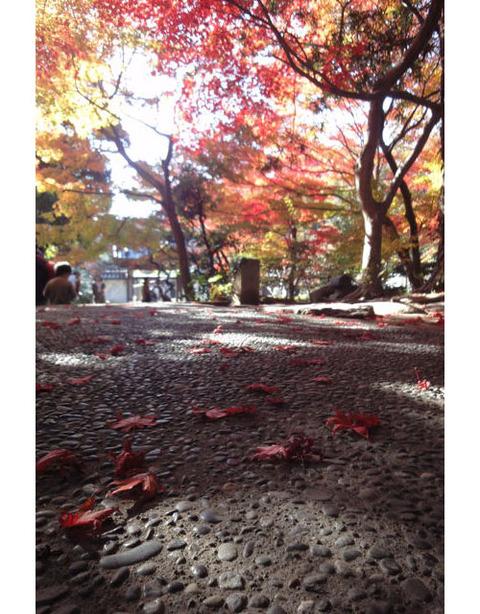 20091128_kakuonji11