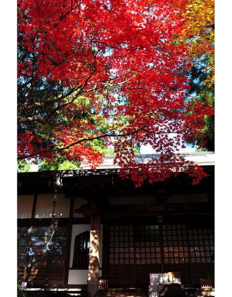 20091128_kakuonji2