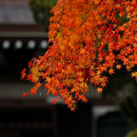 20091205_engakuji1