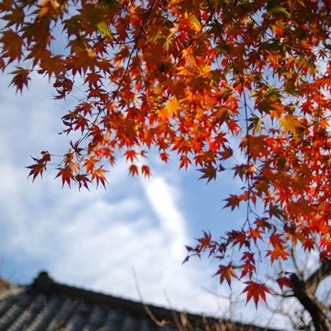 20091205_engakuji3