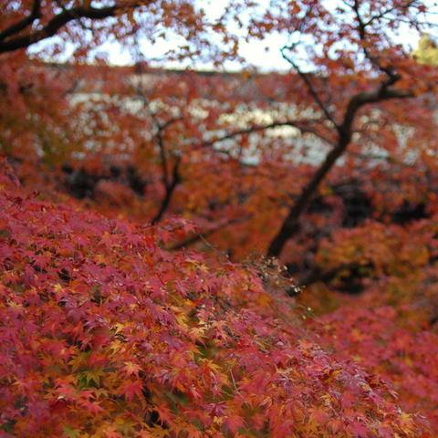 20091205_engakuji4