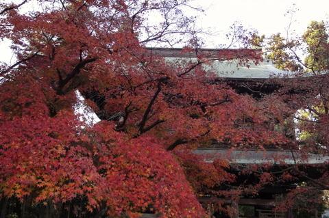 20091205_engakuji5