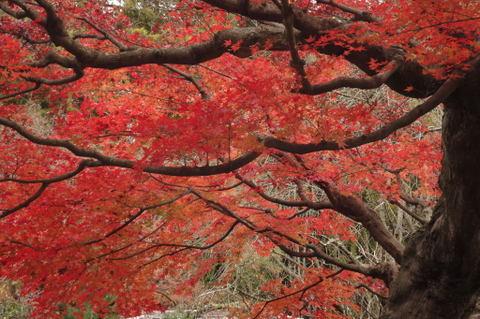 20091205_tokeiji2