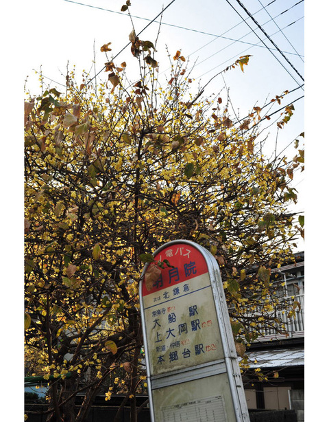 20100111_jochijimae