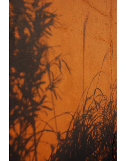 20100123_morning_glow8