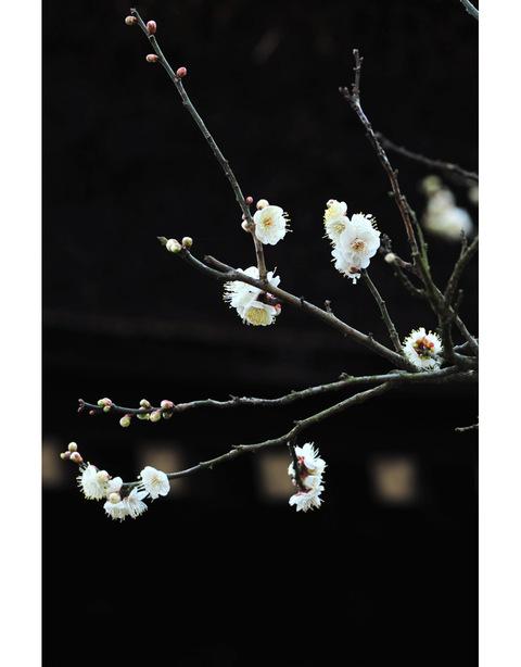 20100130_tokeiji3