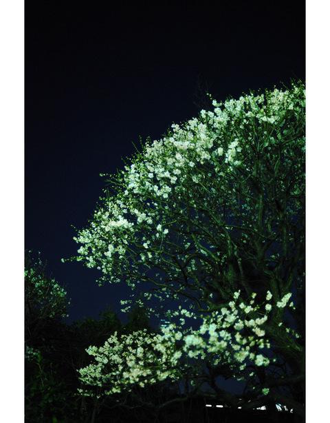 20100130_daikoji2_2