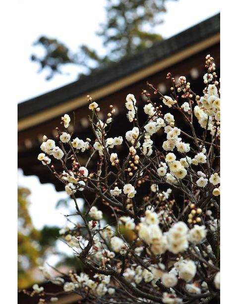 20100131_engakuji3_2