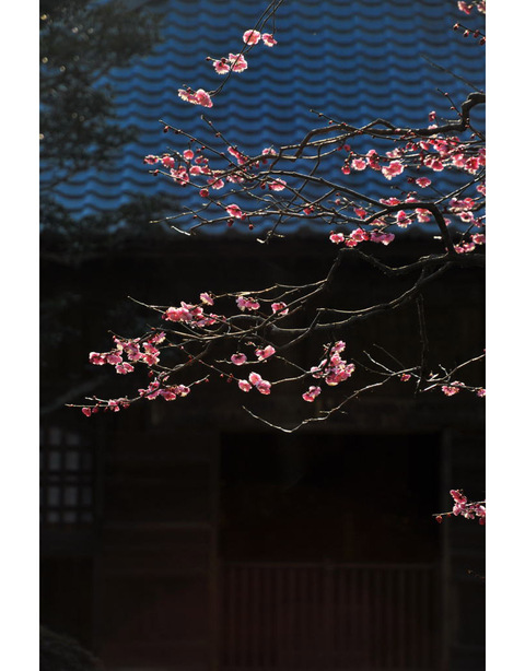 20100205_kaizoji4