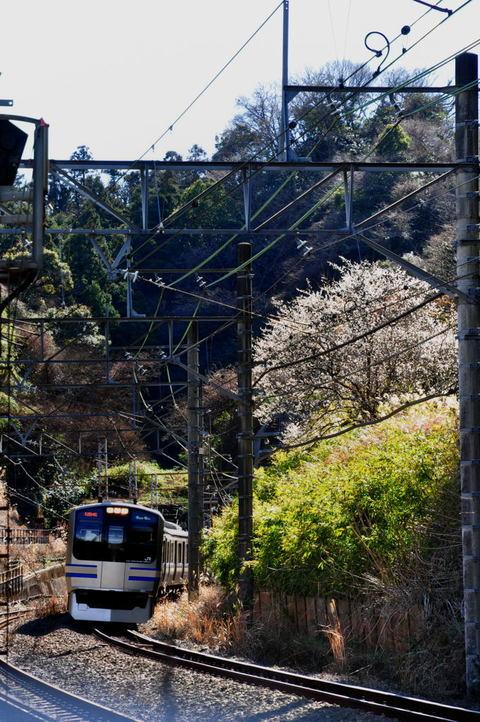 20100206_ensen5