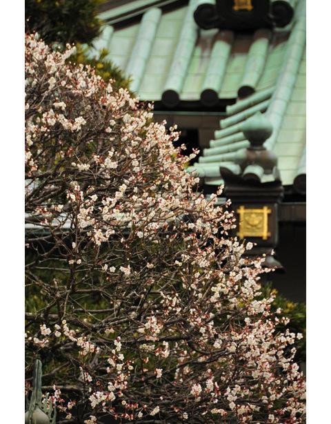 20100212_joeiji3_2