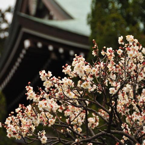 20100212_engakuji1