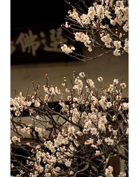 20100212_engakuji2