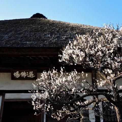 20100220_engakuji1