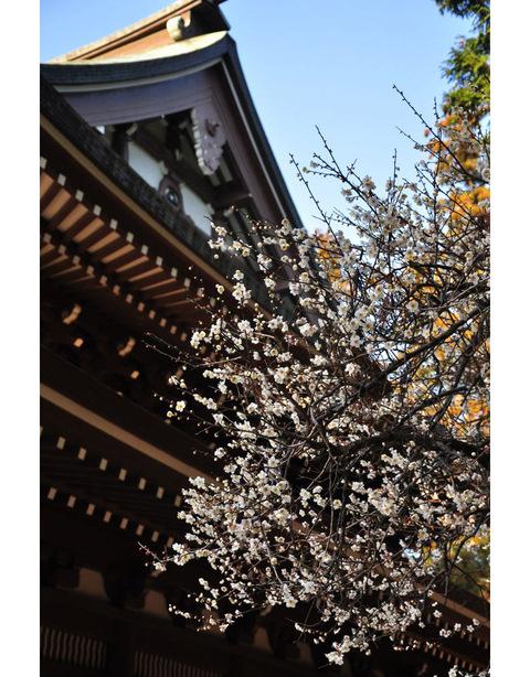 20100220_engakuji5