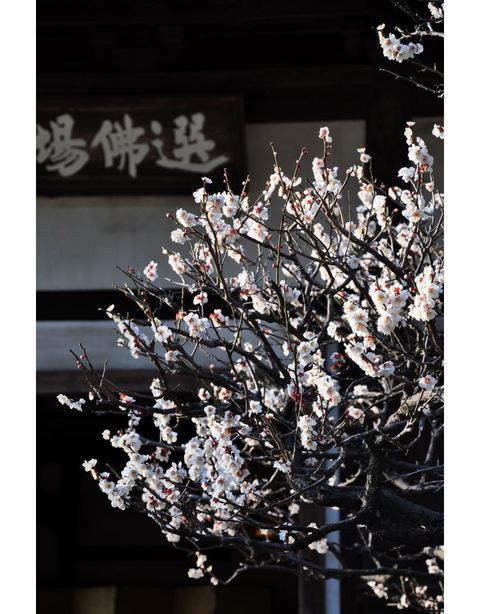 20100220_engakuji6_2