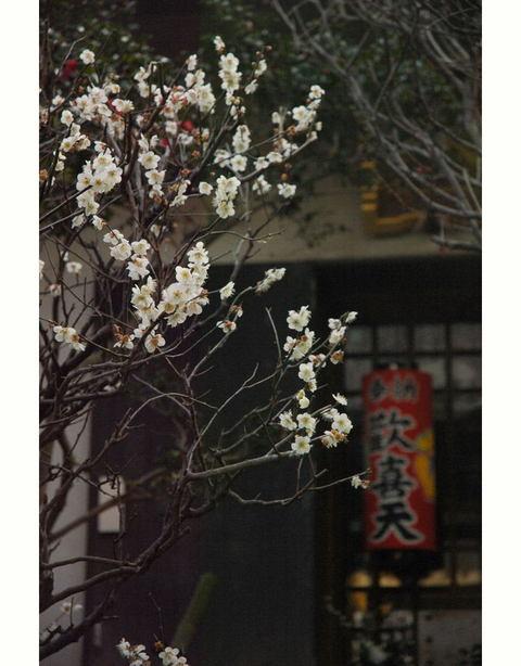 20100303_hokaiji3