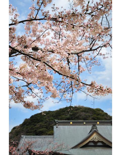 20100403_komyoji5