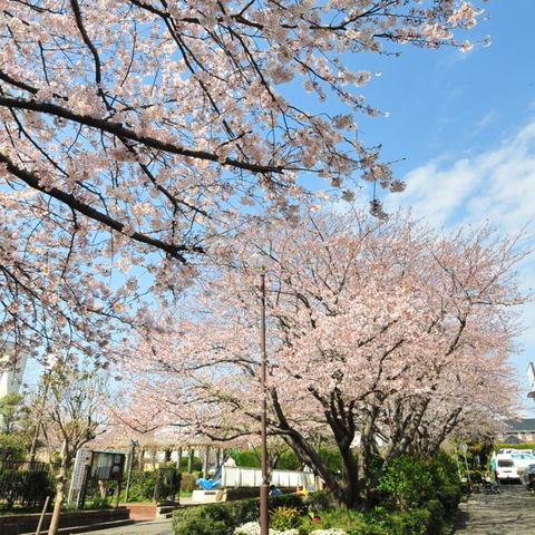 20100403_shichiri1