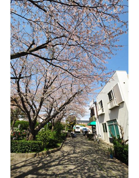 20100403_shichiri3_2