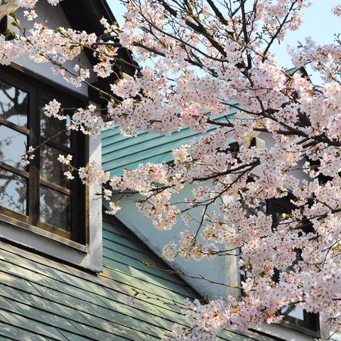 20100403_kamakurayama1