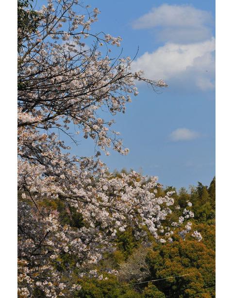 20100403_kamakurayama2