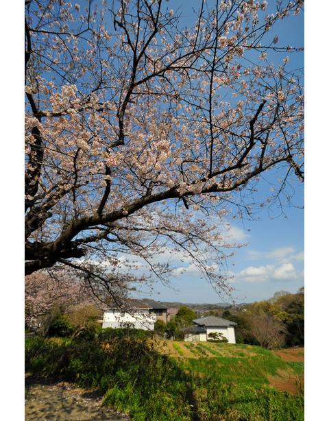 20100403_kamakurayama3
