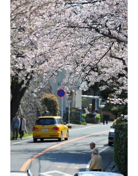 20100403_kamakurayama4