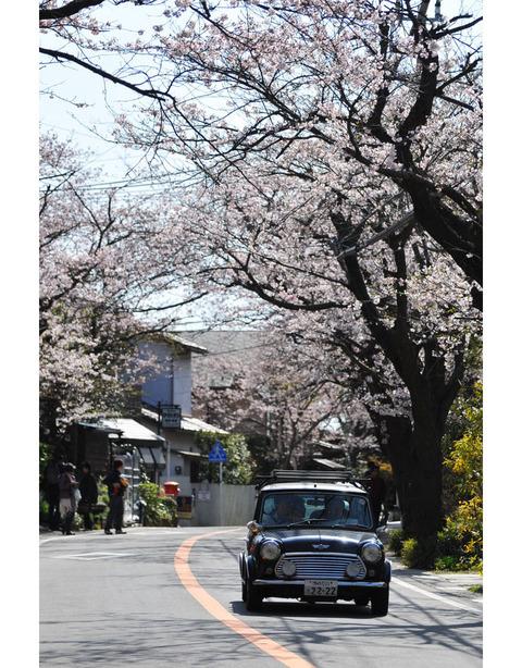 20100403_kamakurayama5