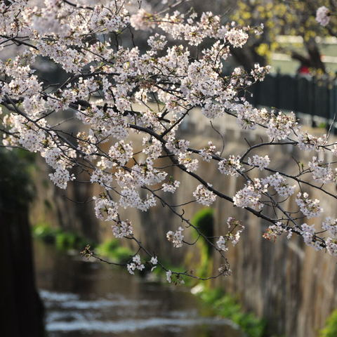20100403_sunaoshi1