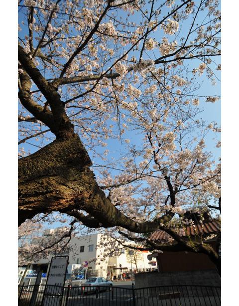 20100403_sunaoshi3