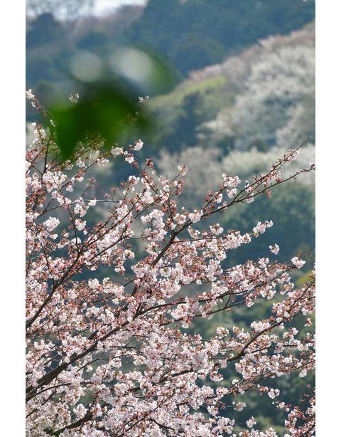 20100406_engakuji3