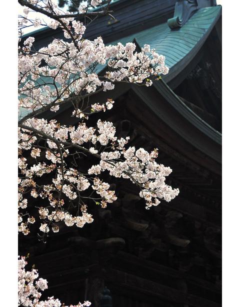 20100406_engakuji5_2