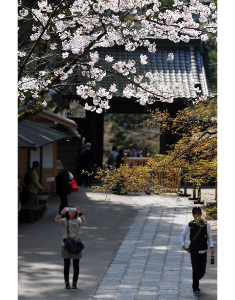 20100406_engakuji6
