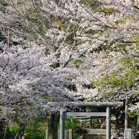 20100406_kuzuoka1