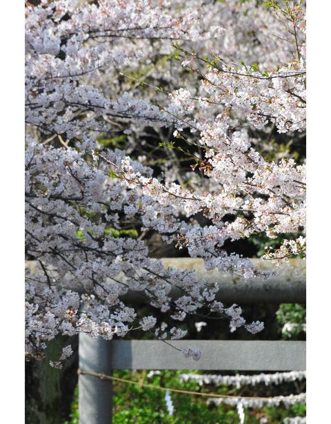20100406_kuzuoka2