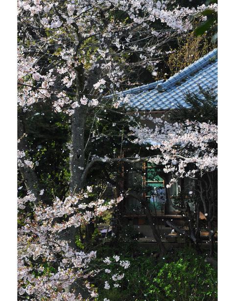 20100406_kuzuoka3