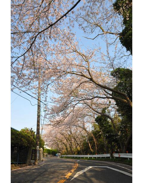 20100406_kajiwara1